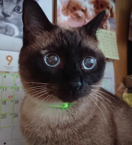 ブルーの瞳