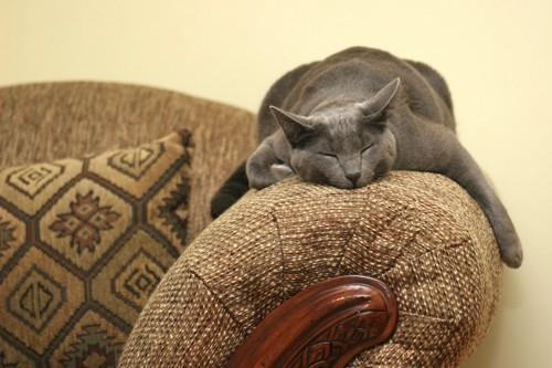 ソファーの上で眠っている猫