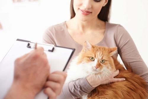 獣医に診断される猫