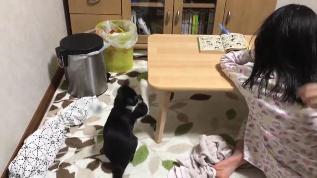 風に猫パンチをする猫