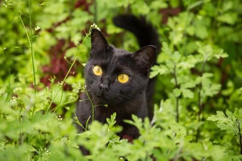 緑の中に居る黒猫