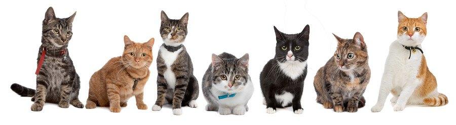 正面を向いた7種類の猫