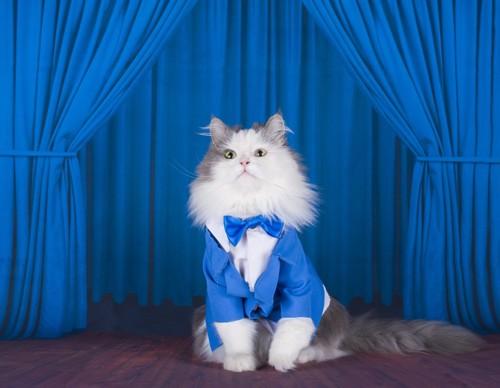 ブルーのスーツの猫