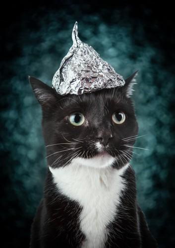 アルミホイルの上にいる猫