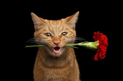 花を銜えた猫