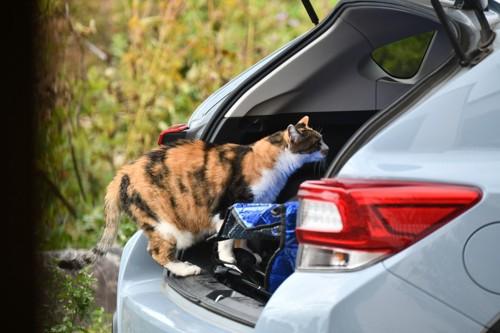車に慣れている猫