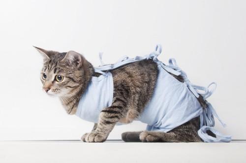 術後着を着る猫