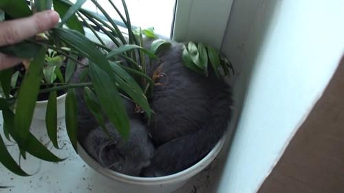 よく見ると猫がいる