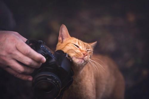 カメラにスリスリする猫