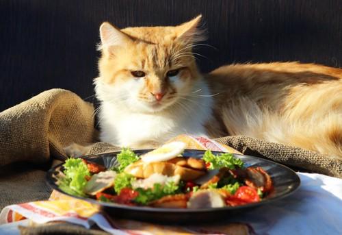 人用の食事を見つめる猫