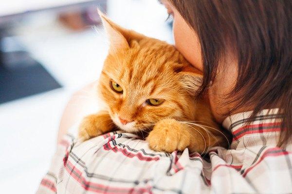 不抱っこされる茶色い猫