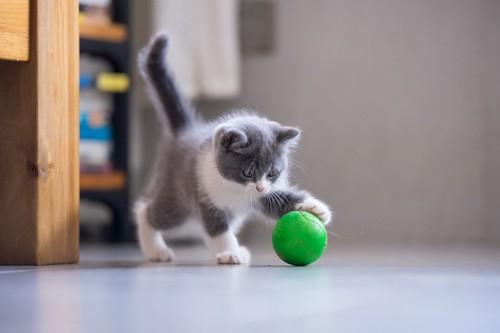 ボールを転がす猫