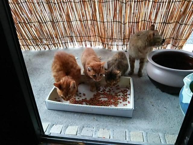 ごはんを食べる母猫と子猫3匹