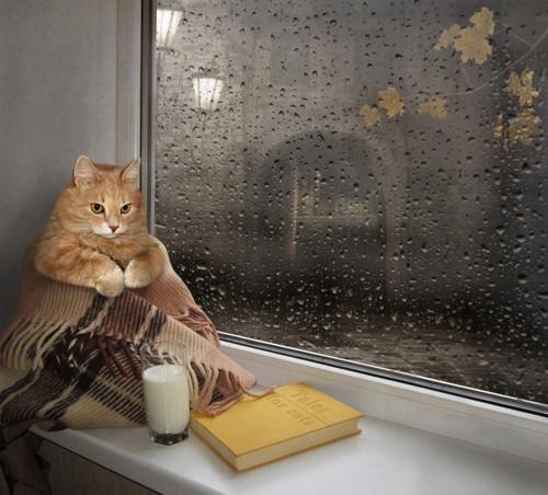 雨の窓際でくつろぐ猫