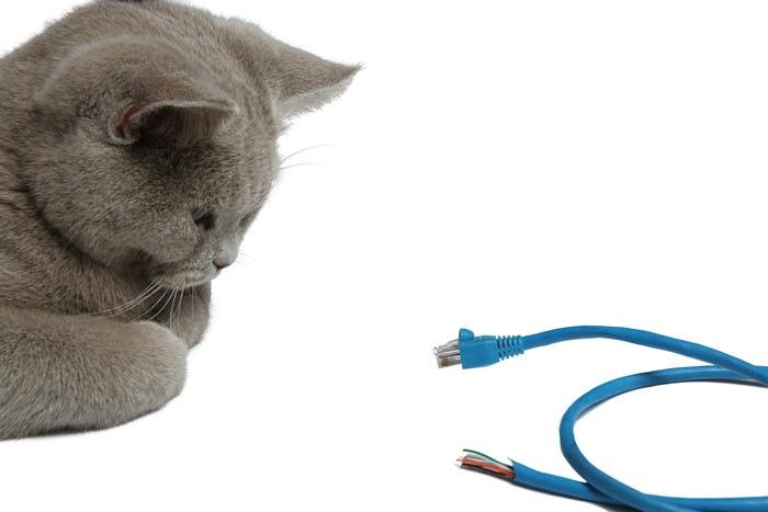 青いコードと猫