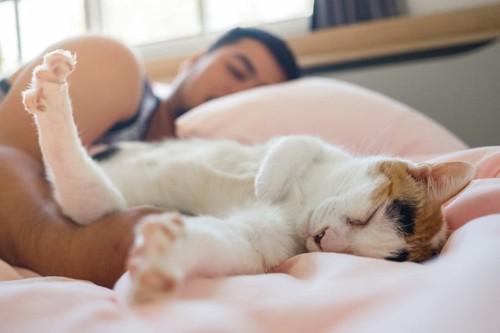 飼い主の隣に寝る猫