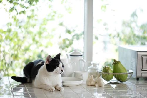 キッチンにいる白黒の猫