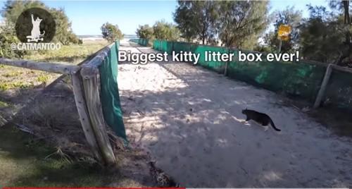 砂浜に2匹の猫