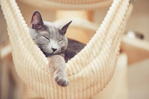 ハンモックで眠るグレーの猫