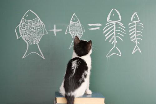 黒板に書かれたかつおを見つめる子猫