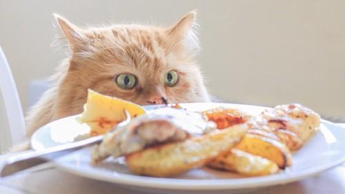 テーブルの上の鶏肉を狙う猫
