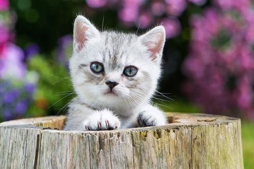 切り株に手をかける子猫