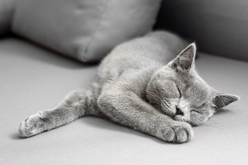身体を伸ばして寝る猫