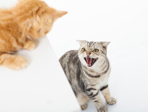 縄張り争いをする猫