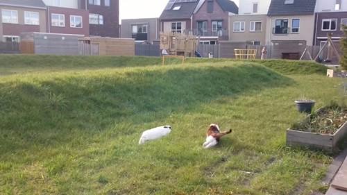 ウサギが追いかける