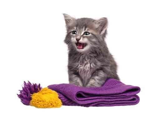 紫のマフラーに乗る猫