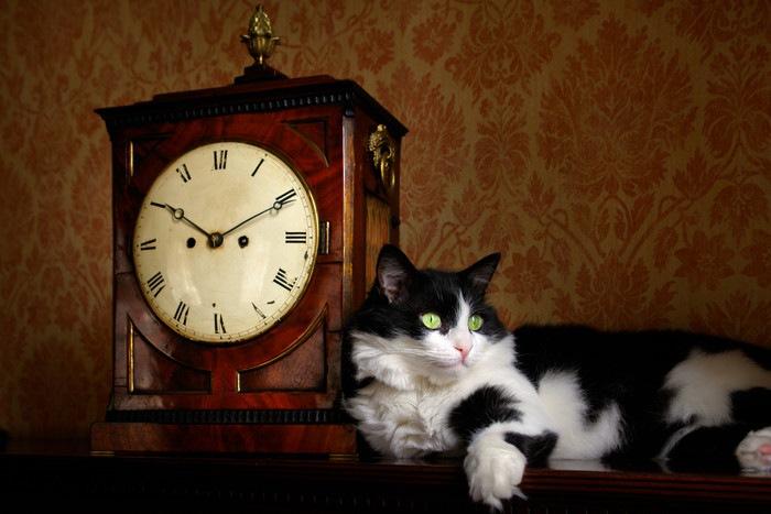 時計に寄りかかる猫