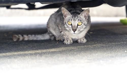 車の下に隠れている猫