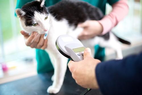 マイクロチップを装着した猫
