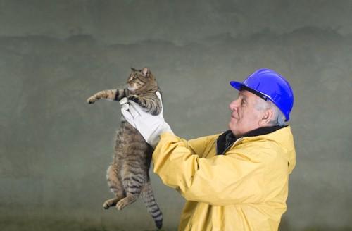 ヘルメットをした男性に抱き上げられる猫