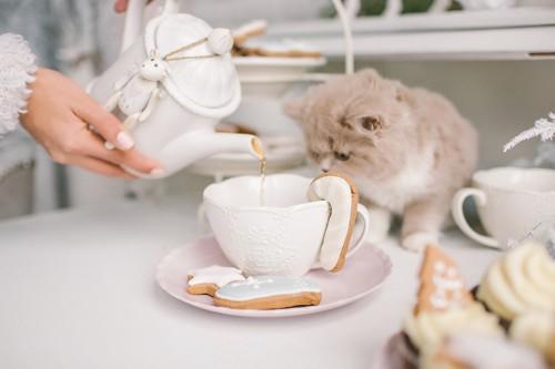 テーブルに乗って人間のお茶を見ている子猫