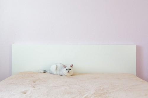 ベッドの上にいる白い猫