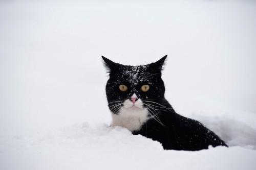 雪の中に埋もれる猫