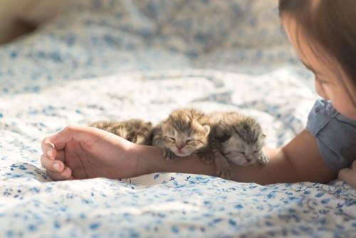 女の子の腕に顎を乗せて眠る子猫たち