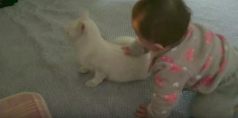 猫をつかまえる赤ちゃん