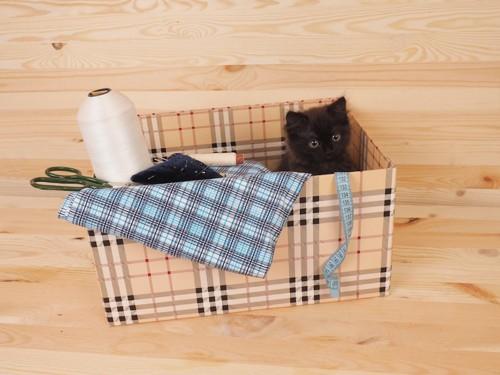 裁縫箱から顔を出している黒猫
