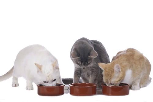 それぞれの食器で餌を食べる三匹の猫