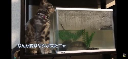 水槽のにおいを嗅ぐ猫