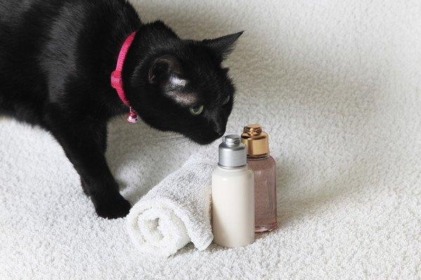 62824653 シャンプー、タオルと猫の写真