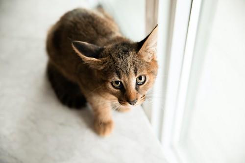 怯えた表情で見上げる猫