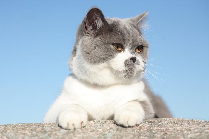 塀から乗り出す猫