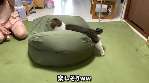 クッションに飛び込む猫