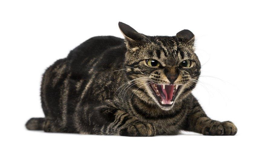 めっちゃ警戒する猫