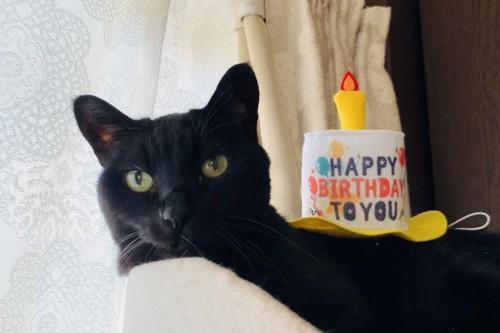 ラム♂ / 18歳 / 黒猫 / 4kg