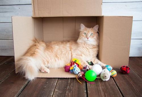 箱の中にいる猫とおもちゃ
