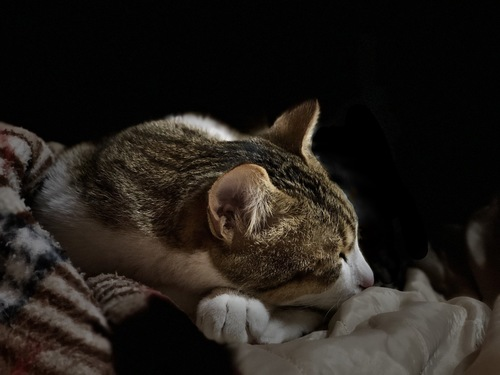 暗闇で寝ている猫
